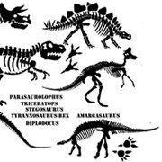 BoscoBear dinosaur bones wall stickers