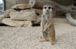 Zoos and Sanctuaries in New South Wales