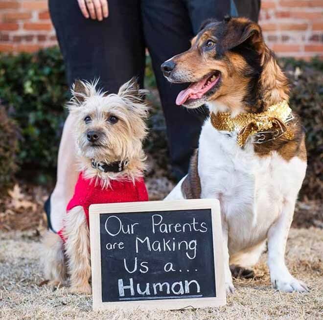 pregnancy announcement idea for couple with pet dogs