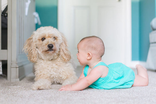 How to introduce a family dog to a baby