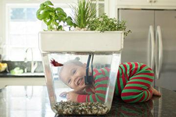 Water Garden 2.0 fish tank herb garden