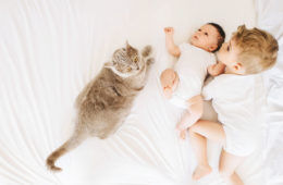 How to prepare your cat for a new baby | Mum's Grapevine