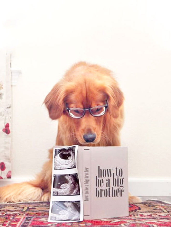 Pregnancy announcements with dogs
