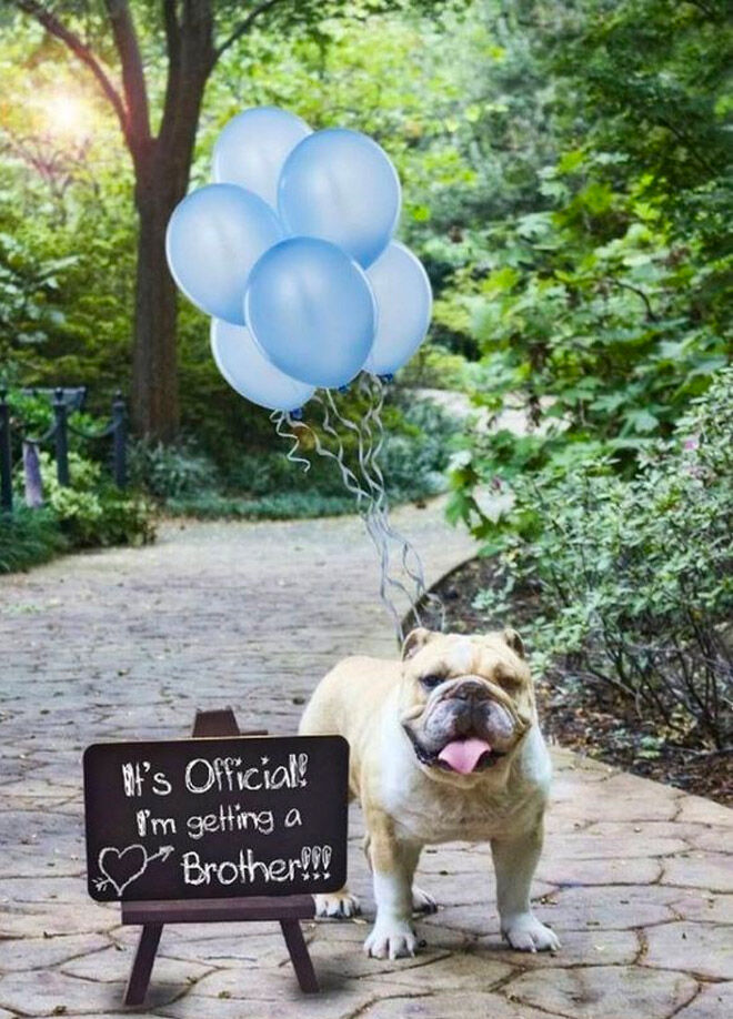 Pregnancy announcement with dog Pinterest