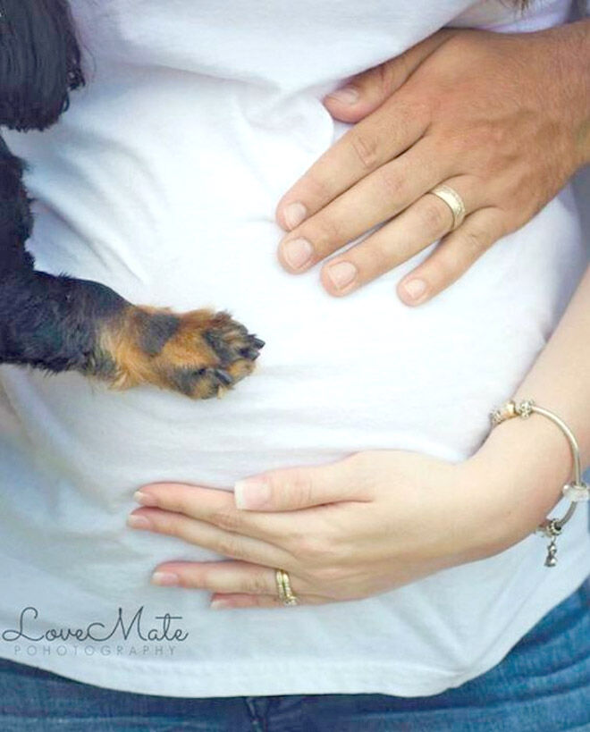 Pregnancy announcement with dog LoveMate Photography