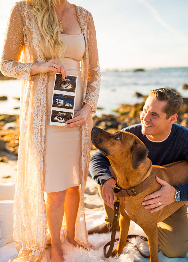 Pregnancy announcement with dog idea Glam Giraffe
