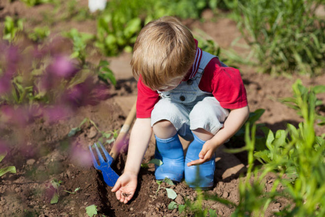 Daycare centres in Finland build a forest floor to study children's immune systems