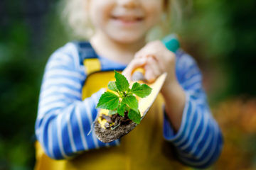 Mini forests at daycare centres improve children's immune systems | Mum's Grapevine